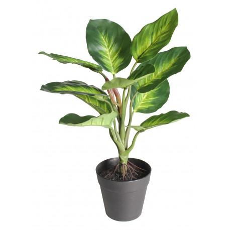 Szt. kwiat w doniczce DIFENBACHIA- 35cm-zielony